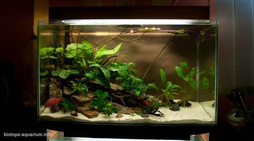 026_biotope-aquarium_a-4-2