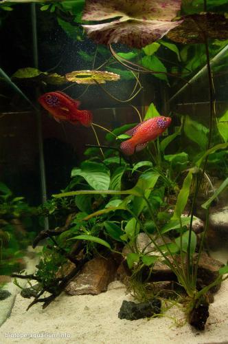 026_biotope-aquarium_a-4-4