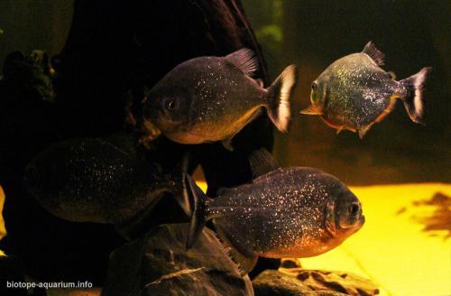 029_biotope-aquarium_sa-4-2