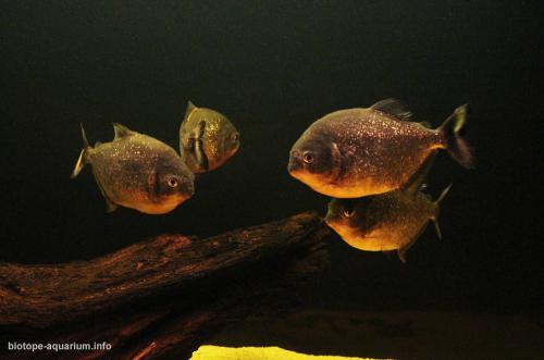 029_biotope-aquarium_sa-4-3