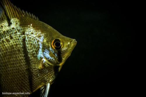 030_biotope-aquarium_sa-18-2