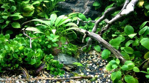 031_biotope-aquarium_a-15-2