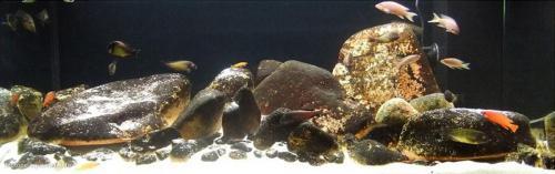 035_biotope-aquarium_a-13-1