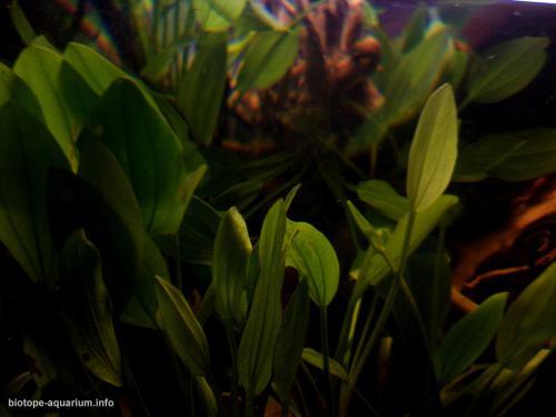 039_biotope-aquarium_sa-11-3