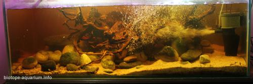 041_biotope-aquarium_e-9-2