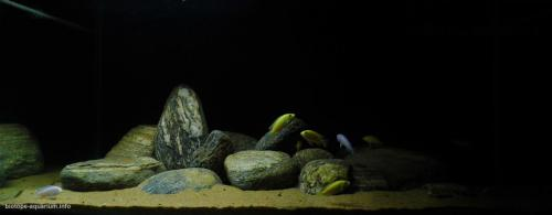 043_biotope-aquarium_a-7-1
