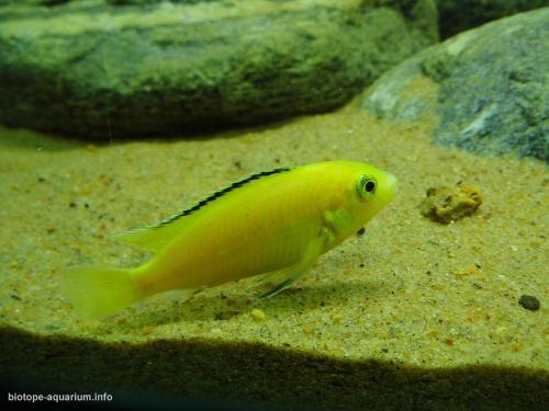 043_biotope-aquarium_a-7-3