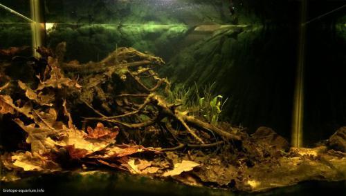 044_biotope-aquarium_e-6-1