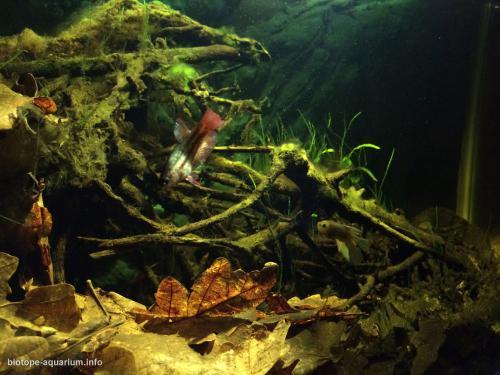 044_biotope-aquarium_e-6-3