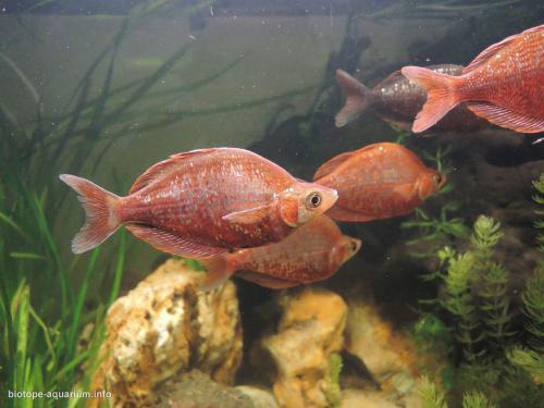 046_biotope-aquarium_ao-4-2