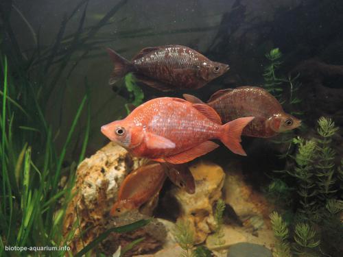 046_biotope-aquarium_ao-4-3