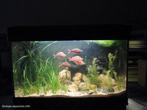 046_biotope-aquarium_ao-4-4