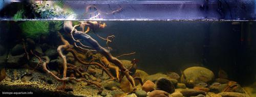 1600-Biotope-aquarium-design-contest-2014-NA