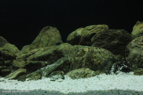 2015_biotope_aquarium_a_11_2