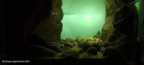 2015_biotope_aquarium_a_18_3