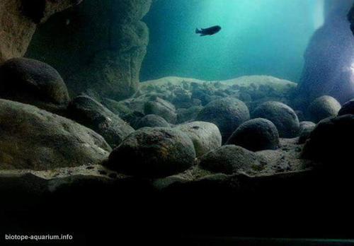 2015_biotope_aquarium_a_18_4