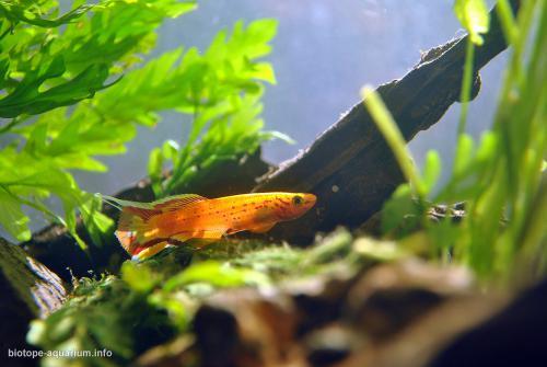 2015_biotope_aquarium_a_4_2
