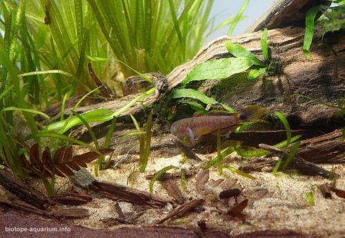 2015_biotope_aquarium_ao_4_4