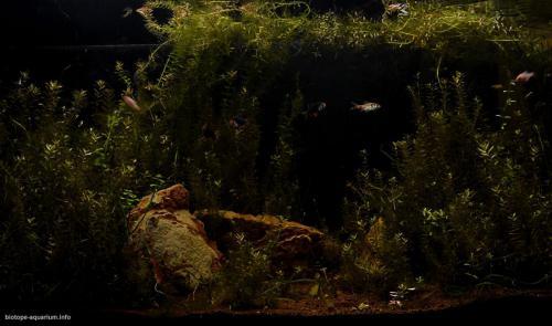 2015_biotope_aquarium_e_15_1