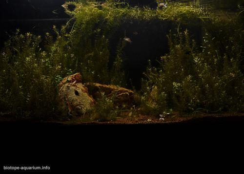 2015_biotope_aquarium_e_15_2