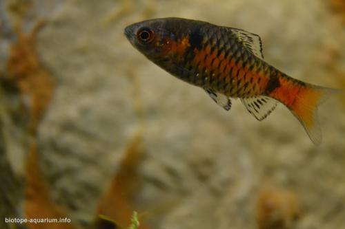 2015_biotope_aquarium_e_15_4