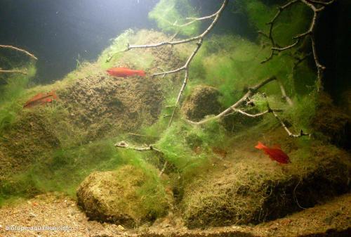 2015_biotope_aquarium_e_1_3