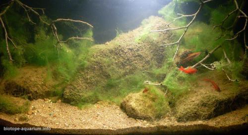 2015_biotope_aquarium_e_1_4
