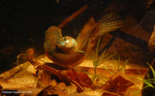 2015_biotope_aquarium_e_5_3