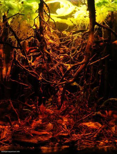 2015_biotope_aquarium_e_9_1