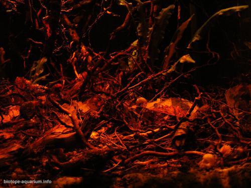2015_biotope_aquarium_e_9_3