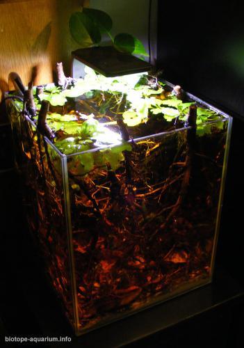 2015_biotope_aquarium_e_9_4