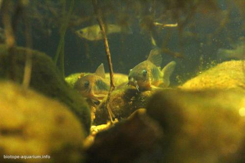 2015_biotope_aquarium_sa_16_2