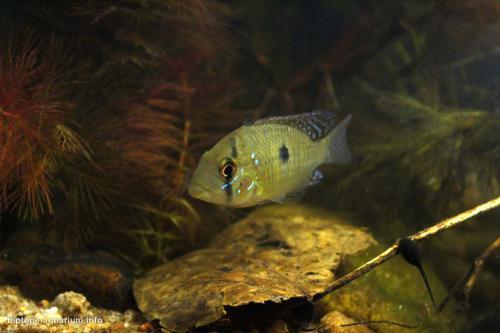 2015_biotope_aquarium_sa_16_3