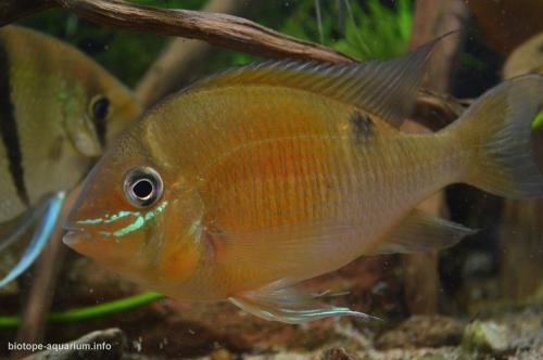 2015_biotope_aquarium_sa_1_2