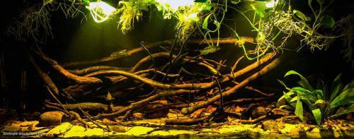 2015_biotope_aquarium_sa_8_1