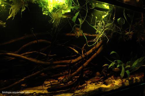 2015_biotope_aquarium_sa_8_2
