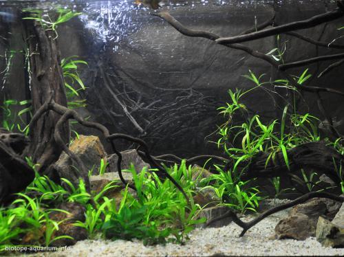 2015_biotope_aquarium_sa_9_4
