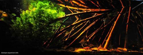 Amazonas_Manaus_Brazil_Rio_Negro_River_blackwater_biotope_1