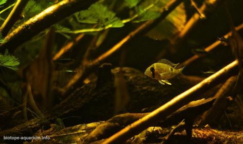 Amazonas_Manaus_Brazil_Rio_Negro_River_blackwater_biotope_6