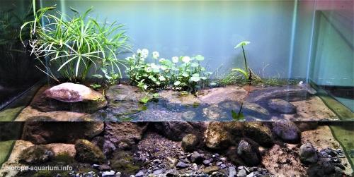 El_Coyote_River_ecologic_park_Charco_Azul_Nuevo_León_Mexico_5