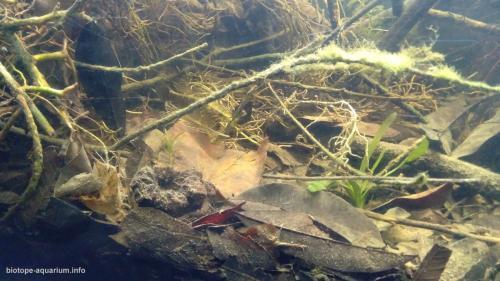 Orilla de un arroyo, afluente del río Tenixtepec, Papantla, México (4)