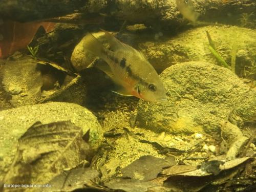 Orilla de un arroyo, afluente del río Tenixtepec, Papantla, México (6)
