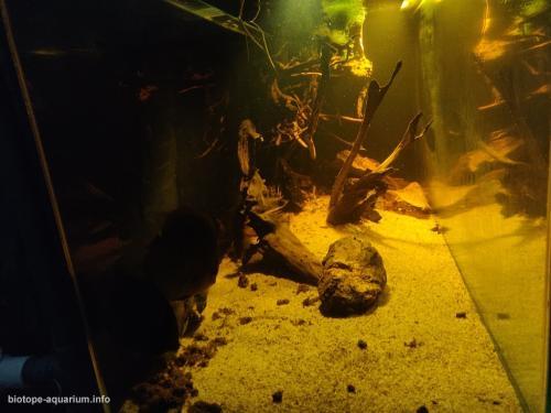 Rio unini, Deep Water and bank (3)