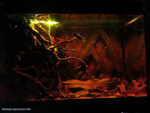 Rio_Caqueta_upstream_blackwater_Colombia_4