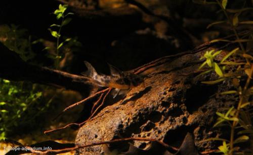 Rio_Negro_biotope_Brazil_3