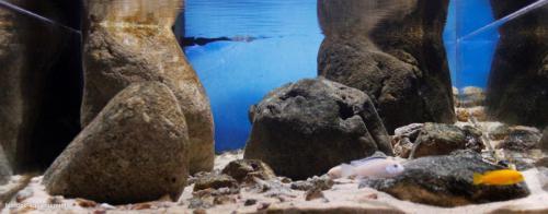 Shallow_intermediate_habitat_of_Nkhata_Bay_Lake_Malawi_1
