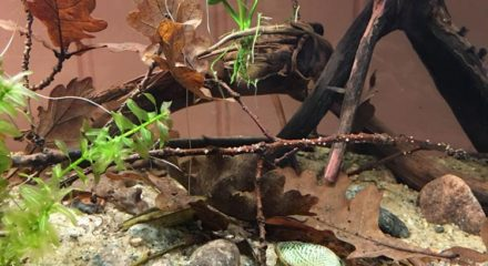 shallow-waters-in-orinoco-with-wild-guppies_5