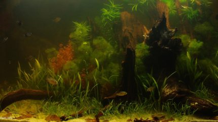 Biotope-aquarium-design-contest-2015-1