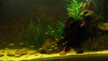 Biotope-aquarium-design-contest-2015-2