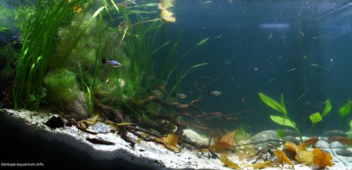 Biotope-aquarium_2012_10_final
